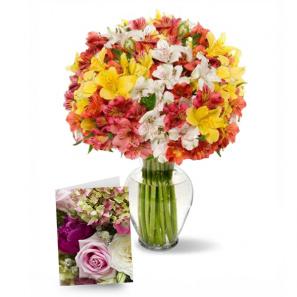 100 Blooms of Alstroemeria I buy at Florist