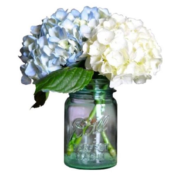 Hydrangea in Mason Jar buy at Florist