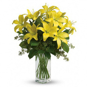 Lily Sunshine buy at Florist